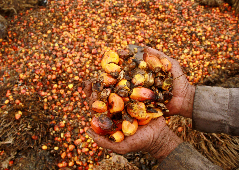Malaysia incentivizes its palm oil industry with Blockchain- Tribeni Das